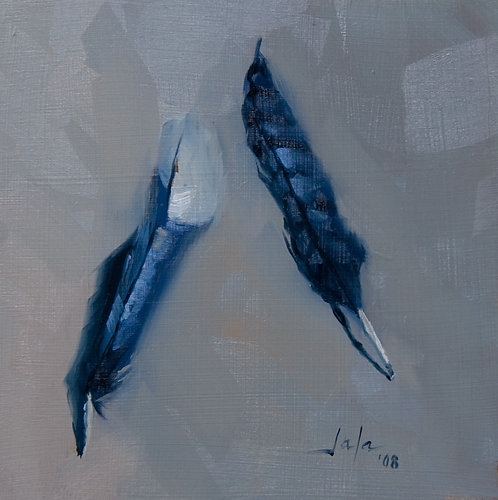 Bluejay-feathers-albumB.jpg
