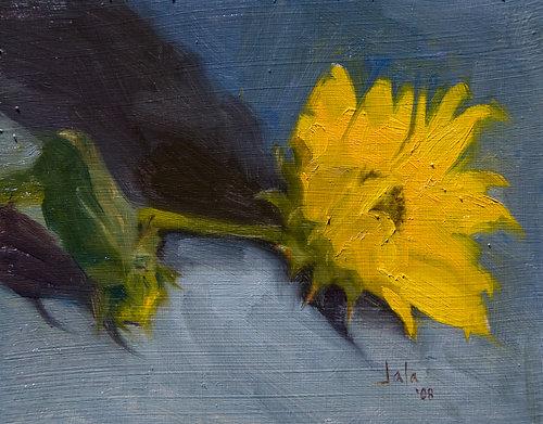 Sunflower-on-blue-albumB.jpg
